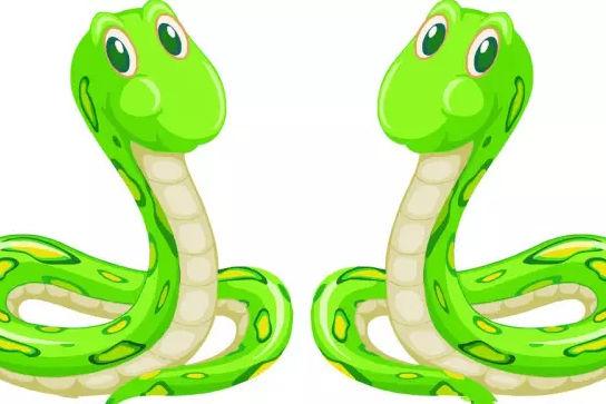 属蛇的属相婚配表