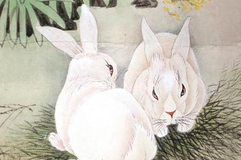 属兔的属相婚配表