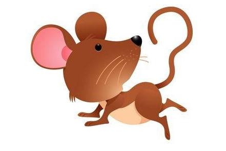 属鼠的和属鼠的属相最配吗?