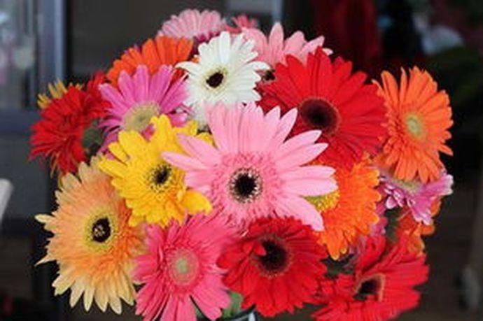 每年的结婚纪念日都有着不同的称呼,不同的人在这一天有着不同的度过方式。很多人在结婚纪念日的时候都会给自己的老婆送花,今天中国婚博会小编为您带来结婚纪念日送什么花给老婆?